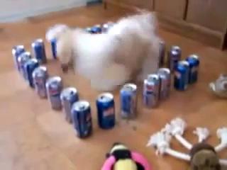 Собака в силовом поле